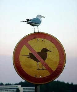 Break the Rules! (photo by: Scott Kleinberg)
