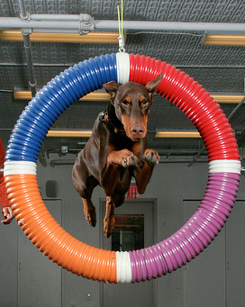 Dog Agility - 18 Dumb Mistakes That You Might Still Be Making On Your Blog